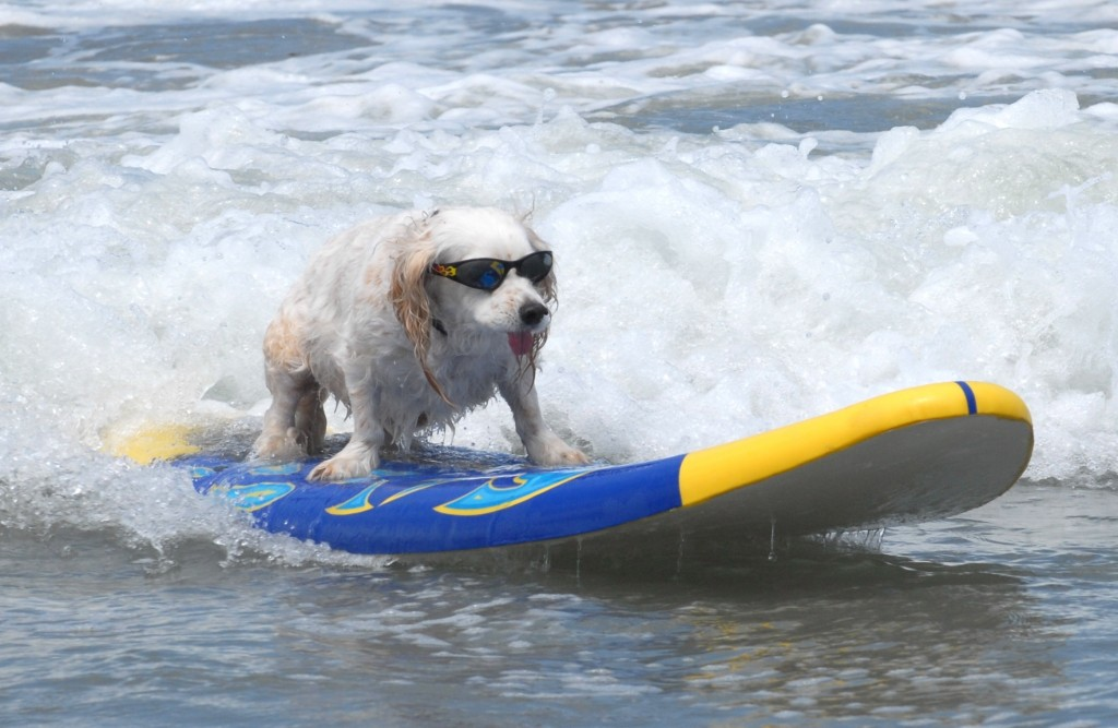 lowes-surf-dog-competition-tj-1024x667